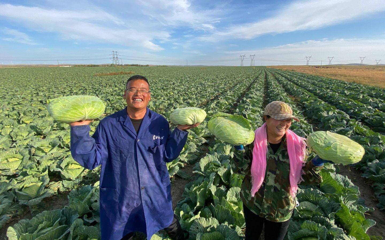 """京蒙协作资金扩建蔬菜厂 化德县贫困户一年还完""""饥荒""""图片"""