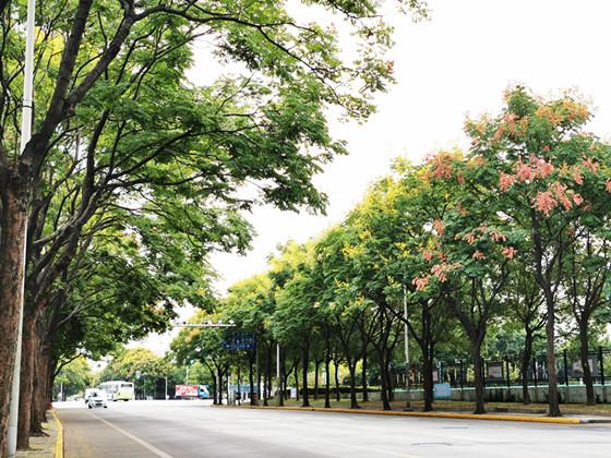 普陀区绥德路、杨柳青路被命名为上海市林荫道