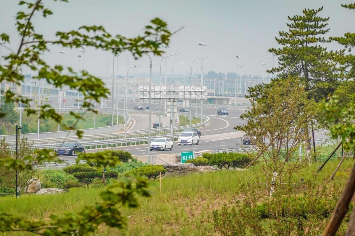 大兴机场高速绿廊升级亮相,99棵油松成最大亮点