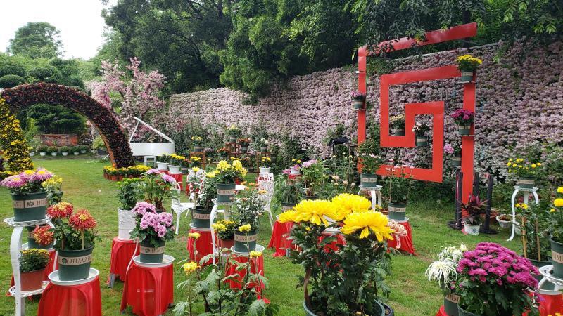 金秋来攀枝花仁和区赏菊,近200个品种、60000余株等你!