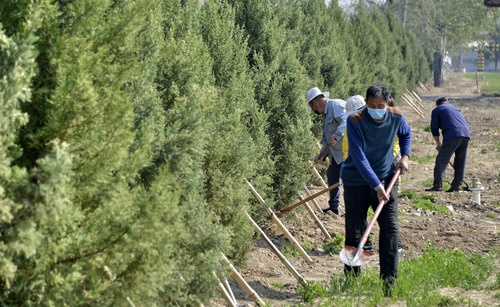"""""""穿过森林去机场"""" 北京大兴国际机场周边造林15万亩"""