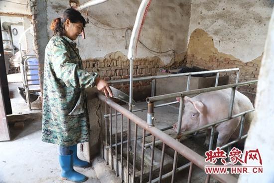 平顶山市石龙区龙河街道姜鲜花:养猪走上致富路
