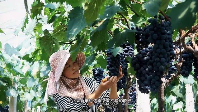 【视频】《我家云南》带你探秘文山新寨村产业脱贫背后的笑容图片