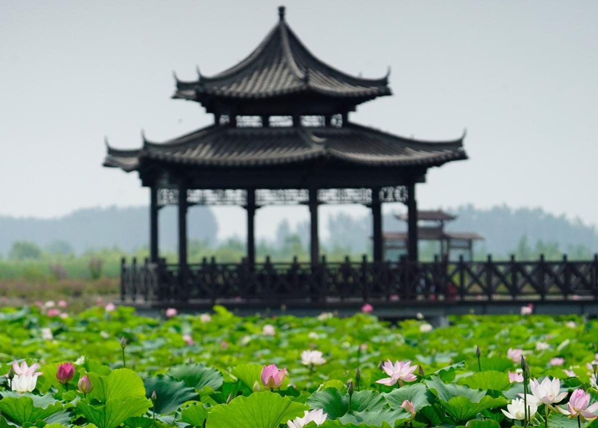 辽河生态景观建设:诗情画意绕阳湖水利风景区在苇海碧波中荡漾