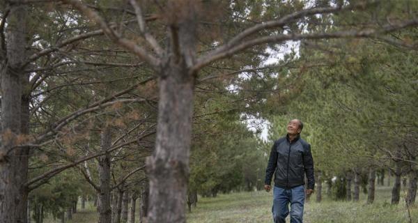 齐军祥:二十年绿化一座荒山