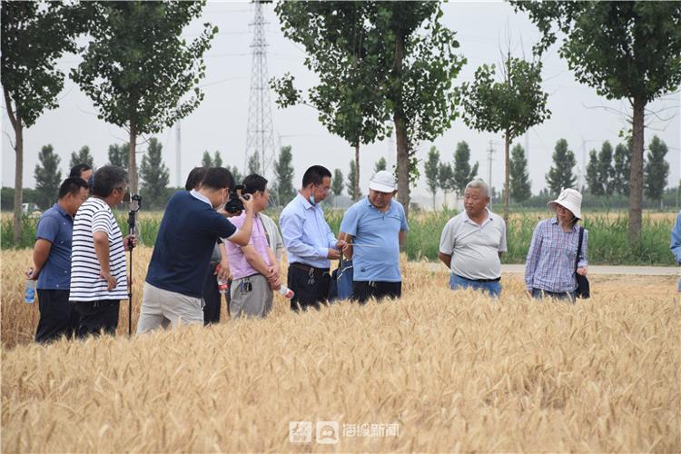 实打验收结束 德州市农科院新品种小麦创高产记录