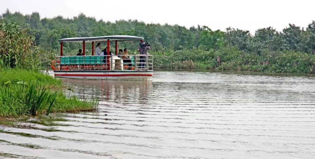 旅游 | 或泛舟或乘坐网红小火车探秘原生湿地美景,南沙湿地二期·寻梦园正式对外试运营