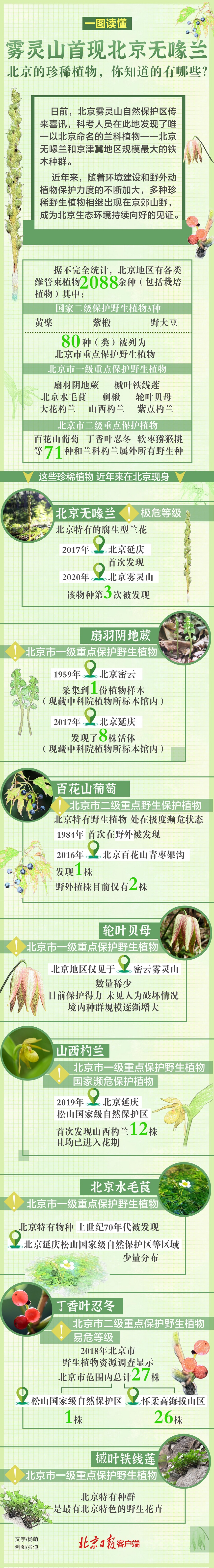 一图尽览|雾灵山首现北京无喙兰,北京的珍稀植物有哪些?