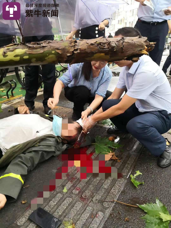 【紫牛头条】外卖小哥被树枝砸重伤,树有保险人有保险,但是…