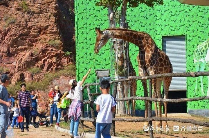 来青山秀水景区看长颈鹿、摘无花果,躺在房车看星星