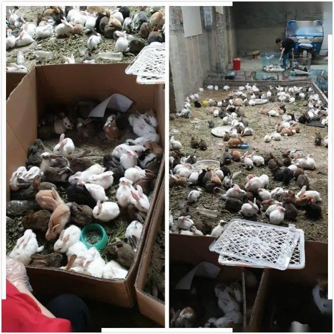 河南漯河一物流园上千只宠物滞留死亡,官方回应
