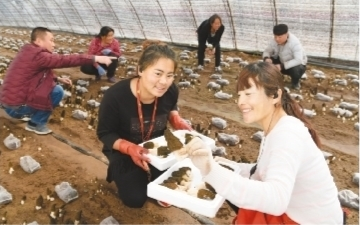 襄阳市双塔区:高效作物拓宽农民致富途径