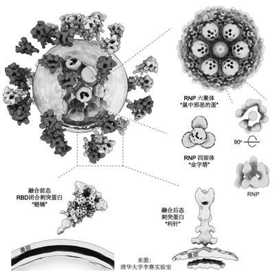 张伯礼、施一公、李兰娟齐点赞新冠病毒完整结构图到底多牛