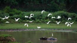 湖南蓝山 为了候鸟的顺利迁徙 3天的聚光
