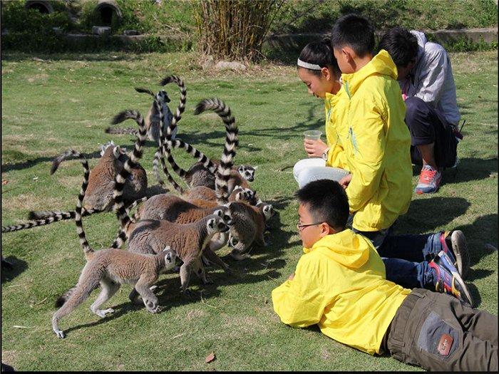 首届雅戈尔动物园健康快乐嘉年华10月1日盛大开幕