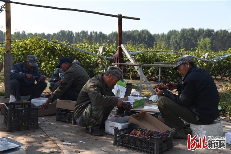 """""""全国网络媒体乐亭游""""从农业园区出发:现代农业示范与旅游旅游相结合"""
