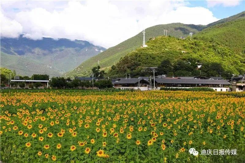 """吃上旅游饭,风景变""""钱景""""!迪庆州让更多贫困户从旅游业中获益"""