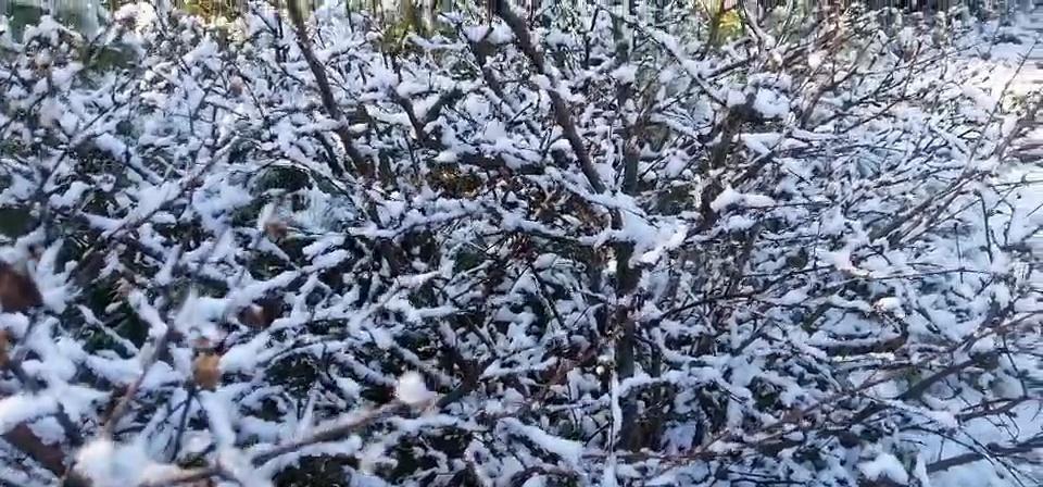 美翻!我省大兴安岭地区迎来深秋首场降雪