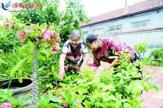 """村村有美景 院院皆画卷 潍坊峡山区让""""美丽庭院""""创建成为新时尚"""