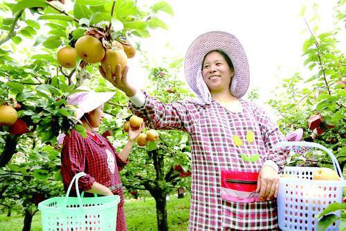 """黄平县:唱""""山""""字帮助农民增加收入"""