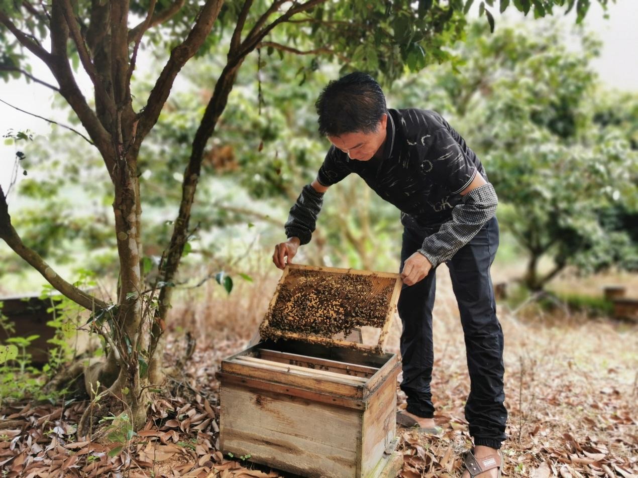 钦州市灵山县:养蜂业助力农民脱贫增收