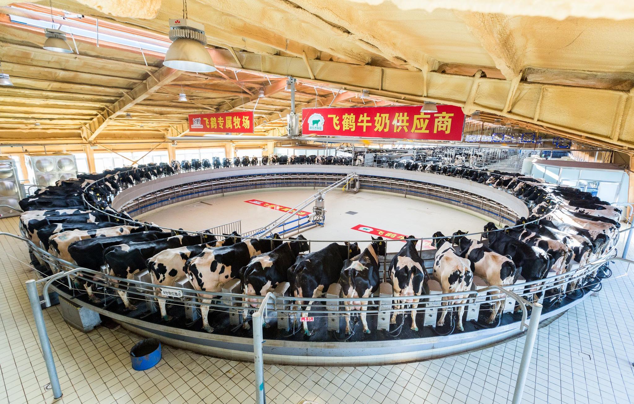 飞鹤拟入主原生态牧业,加码上游奶源布局