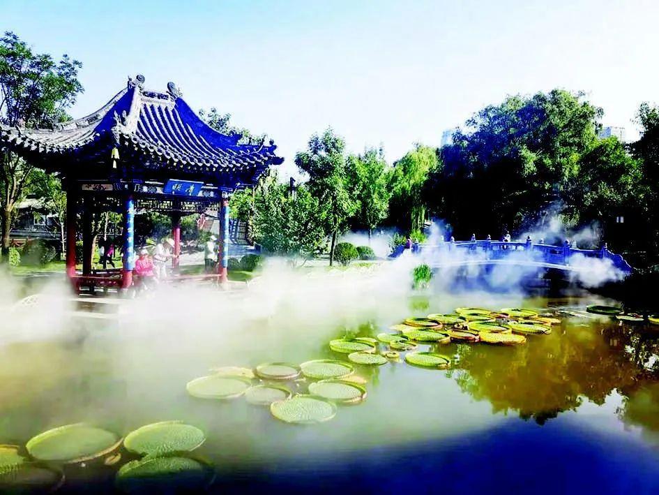 太原人 来迎泽公园享受王莲吧!