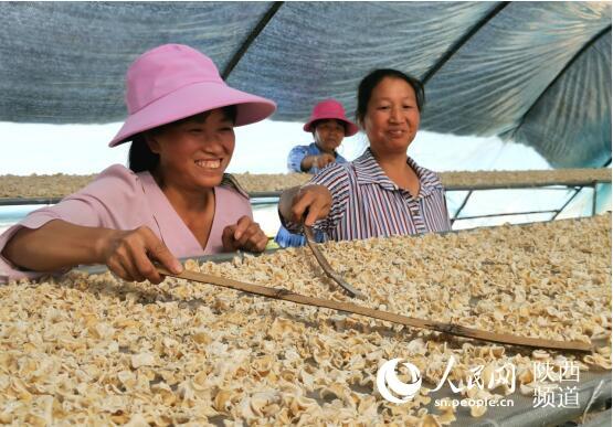 陕西省勉县:特色产业拓宽人民致富之路
