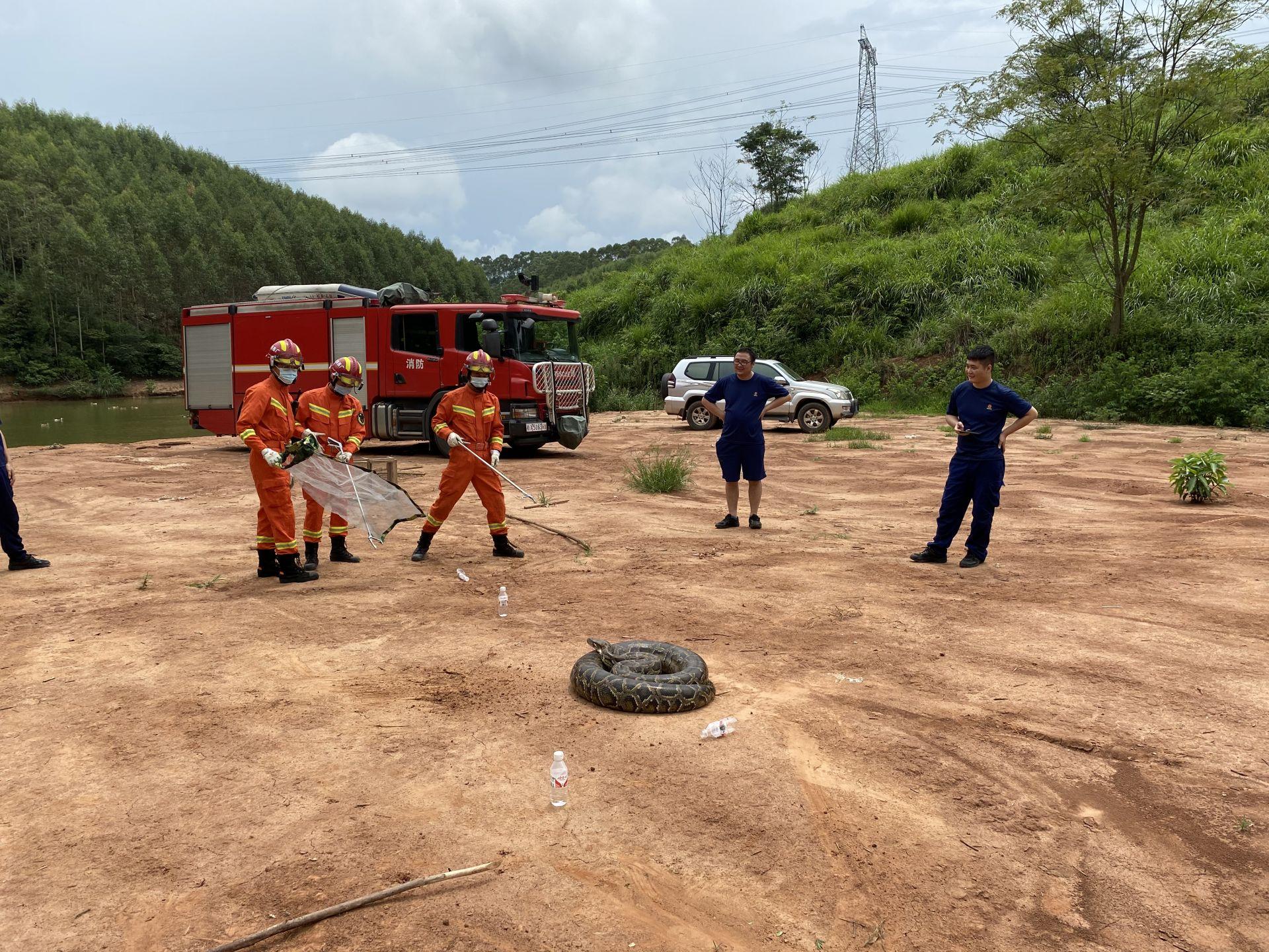 南宁一养殖场惊现90斤大蟒蛇 消防员化身捕蛇达人