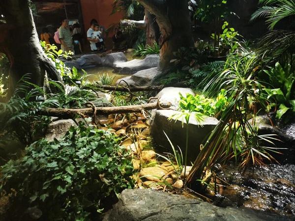 上海动物园将再添一座两栖爬行馆