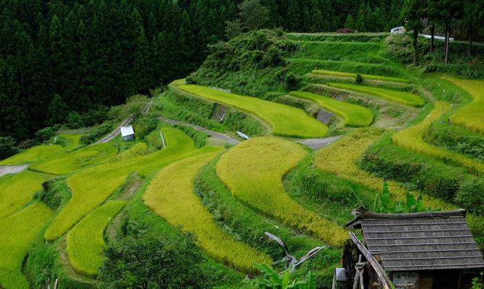 """""""零浪费""""17年 日本这座老龄化小镇如何成为楷模?"""