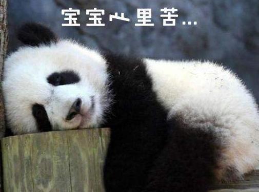 """北京动物园网红大熊猫""""突然头秃"""",啥情况?!"""