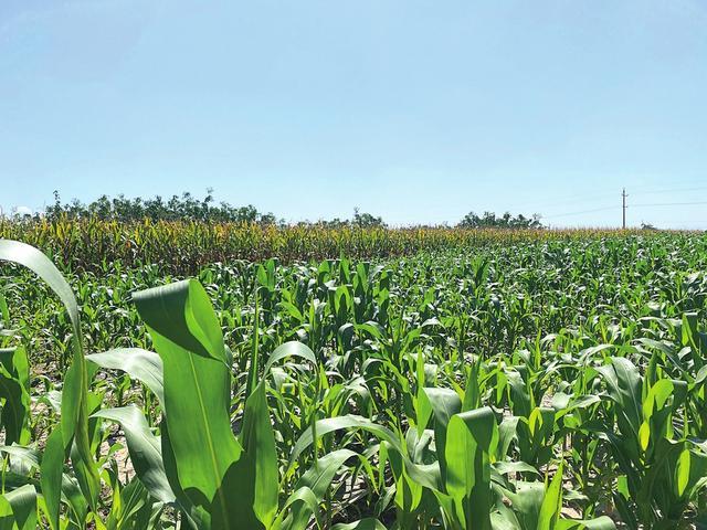 功能性农产品:山西农业新