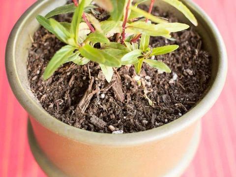 教你用这基质,选择、调配出超级实用的养花土!