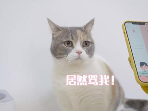 花168元买猫语翻译器,真能翻译猫叫,还是智商税?