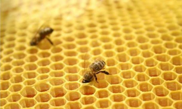 抓一群采集蜂冻一冻,能够组成一个无王群?蜜蜂转场已经有了答案