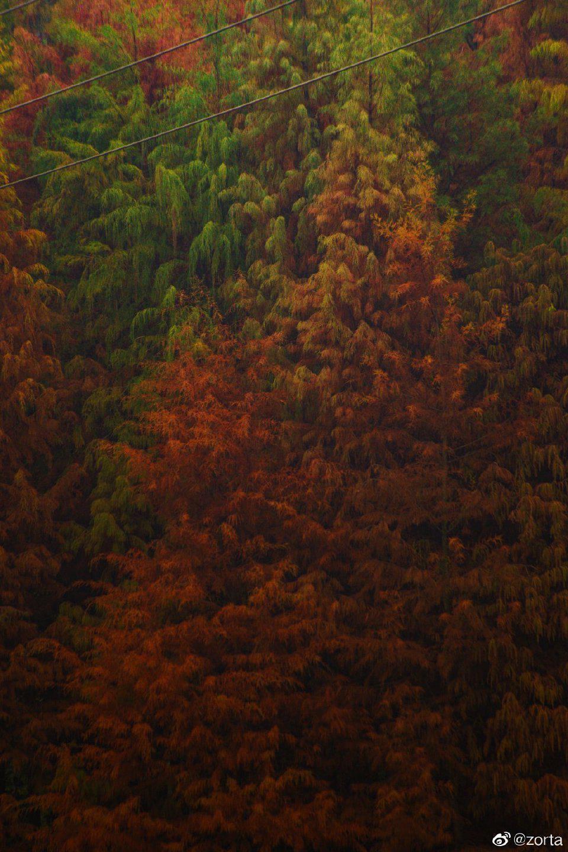 镜头下的狮山公园落羽杉氛围感太棒了~