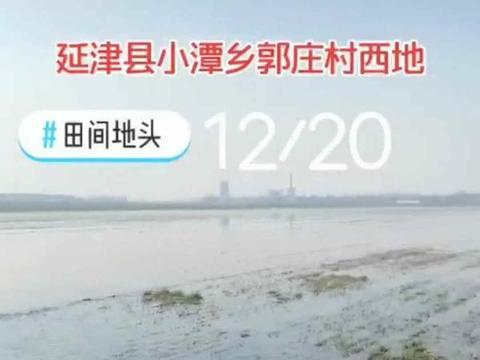 新乡市延津县防汛河水淹麦田百余亩,水闸监管成盲区