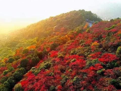 广东的小香山,满山红叶,石门香雪,石门森林公园赏枫攻略来了