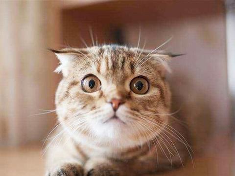 猫咪眼屎过多的原因找到了~