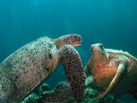 为什么说深海1万米的水压很可怕,鱼还能在深海里游动呢?