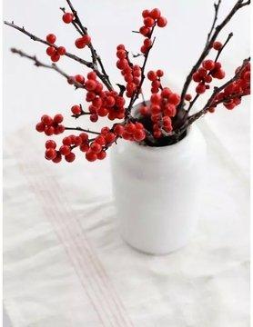 好看又好养的北美冬青,红果挂满树,拿来做年宵花很合适!