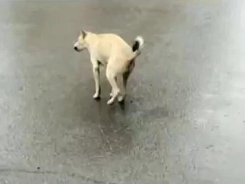 流浪狗看见人立马远离,生怕被攻击,被冤枉!