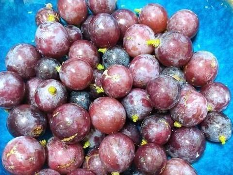 """这个水果是""""花青素""""王之一,他比肉贵,他可以加强视网膜,不管"""