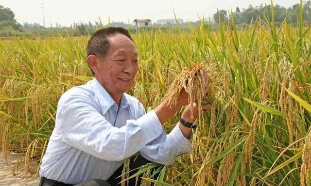 袁隆平开通短视频账号,7小时涨粉300万,不愧是世界杂交水稻之父