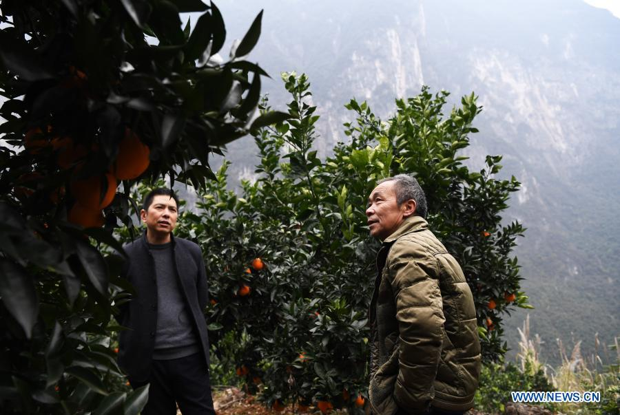 Mao Xianglin (R) introduces the oranges to a fruit trader at Xiazhuang Village, Zhuxian Township, Wushan County of southwest China's Chongqing, Jan. 6, 2021. For those who lived in Xiazhuang Village, it once took them two days to reach the nearest county. Thanks to the unceasing efforts of Mao Xianglin, the onerous travelling has become a history. In 1997, 38-year-old Mao Xianglin, the secretary of Communist Party of China (CPC) branch of Xiazhuang Village and head of the village committee, mobilized the villagers to build a better road to the outside world. To speed up the road building, Mao once worked and lived at the construction site for three months without going home. Finally in 2004, an 8-kilometer long and 2-meter wide road was finished. After more widening and hardening work conducted by the local government, the travel time from Xiazhuang Village to the county seat has been slashed to about one and a half hours. For Mao, building a road is the first step, and seeking a way to prosperity is the second. After consulting experts, he decided to develop orange planting industry in the village. Now, the orange orchard here covers an area of about 650 mu (about 43.3 hectares), and the whole village has shaken off poverty in 2015.