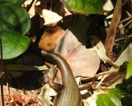 蛇类捕食者对蜥蜴的影响:体温升高,跑得更快