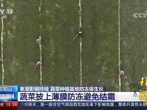 寒潮影响持续,广东阳山蔬菜种植基地防冻保生长