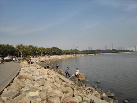 深圳湾沿途风景:等天气转暖了,还要再去骑行