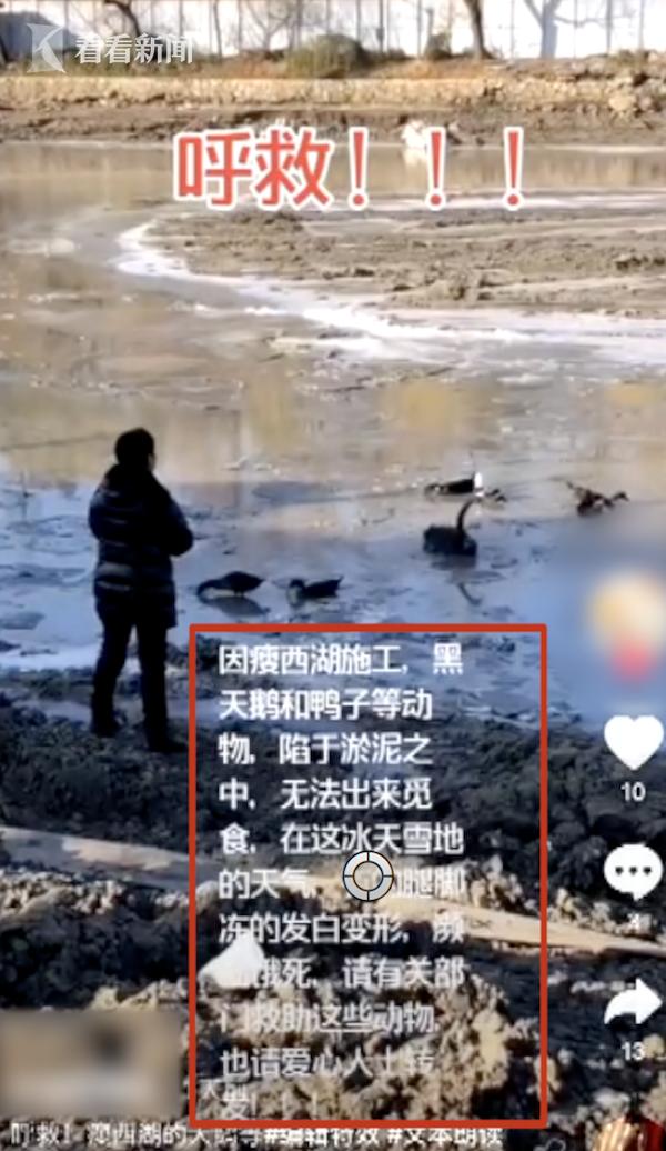 视频 瘦西湖黑天鹅忍饥挨冻?真相来了